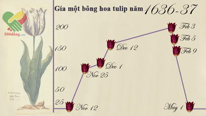 hình-3-dau-co-hoa-tulip